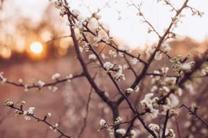 morning-blooms